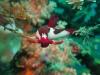 Nachttauchgang - Whaleshark Divers